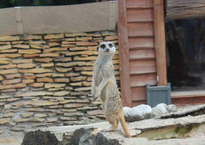 Safari Zoo 2016-2017 16